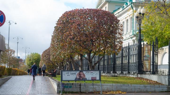 Провожаем тёплую осень: после рекордных для октября температур в Екатеринбурге заметно похолодает