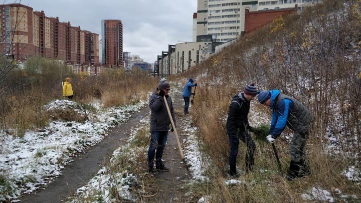 Активисты высадили сосновую рощу возле речки в Заельцовском районе