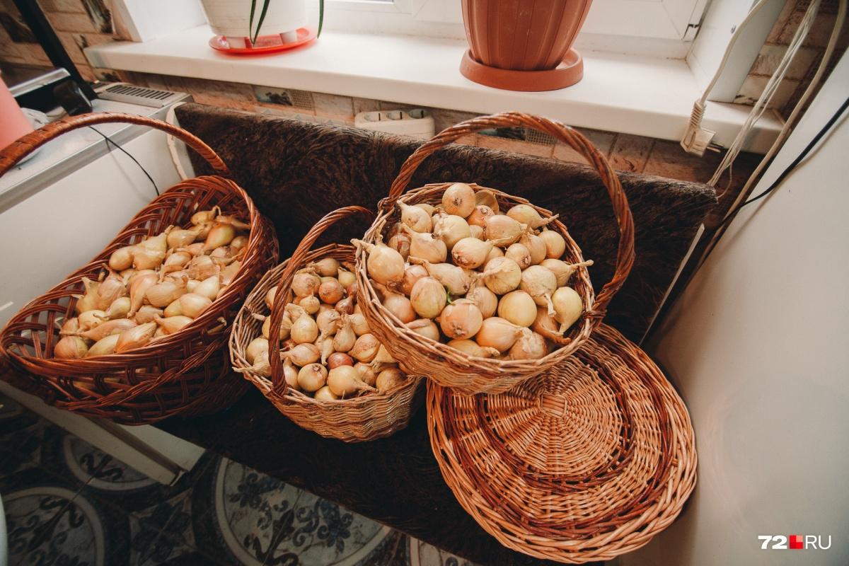 Ученики хранят в собственных корзинах урожай, ходят с ними по грибы и ягоды