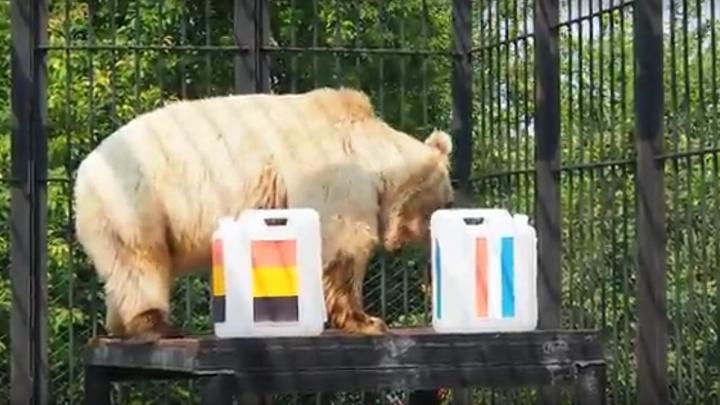 Красноярский медведь назвал финалиста чемпионата мира по футболу
