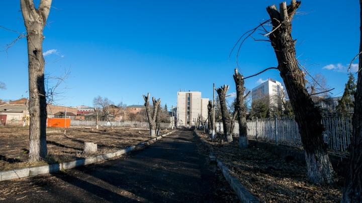 В Красноярске начался сезон обрезки. В план попали 30 тысяч деревьев