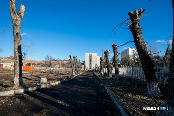 В Красноярске проводят 3 вида обрезки деревьев