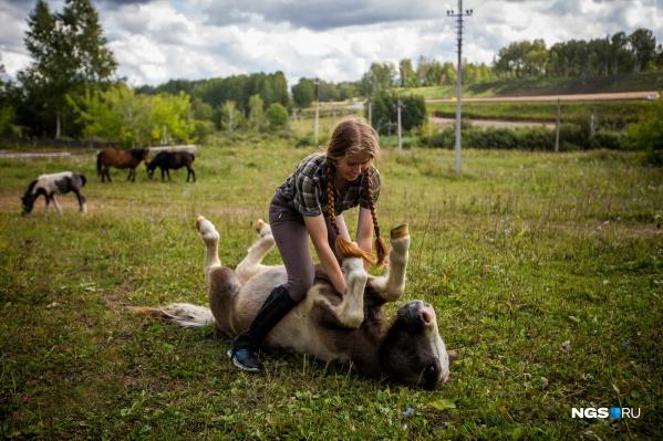 Заводчики сравнивают пони с кошками: им нравится, когда их гладят и почёсывают