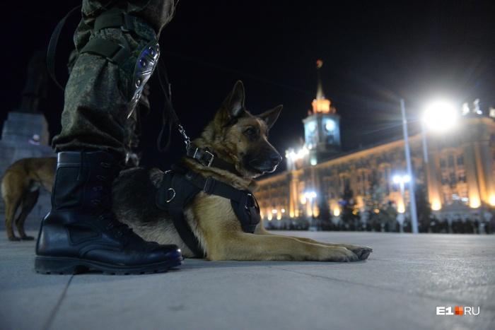 Боевые собаки тоже приняли участие в репетиции