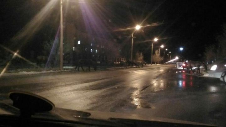 В центре города в Башкирии разгуливал табун лошадей