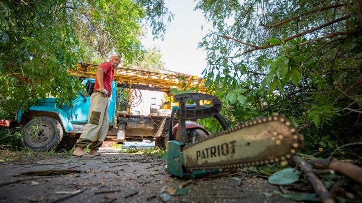 Ростовская пенсионерка чудом выжила после того, как на нее упало дерево: рассказываем подробности