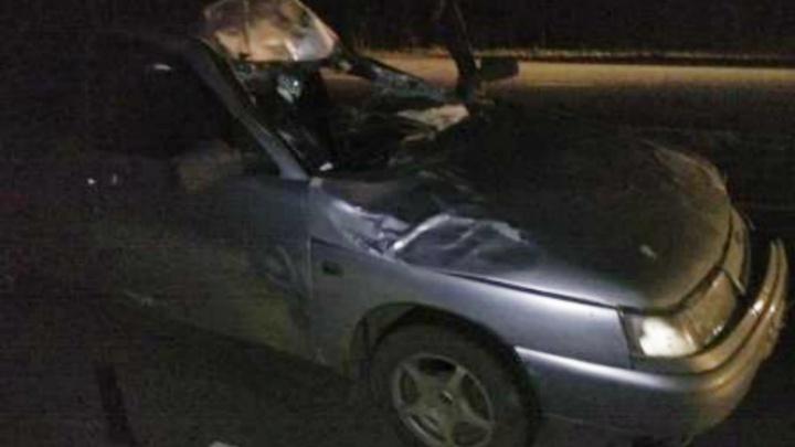 В Ярославской области лось пробил лобовое стекло машины: пострадали молодые мужчины