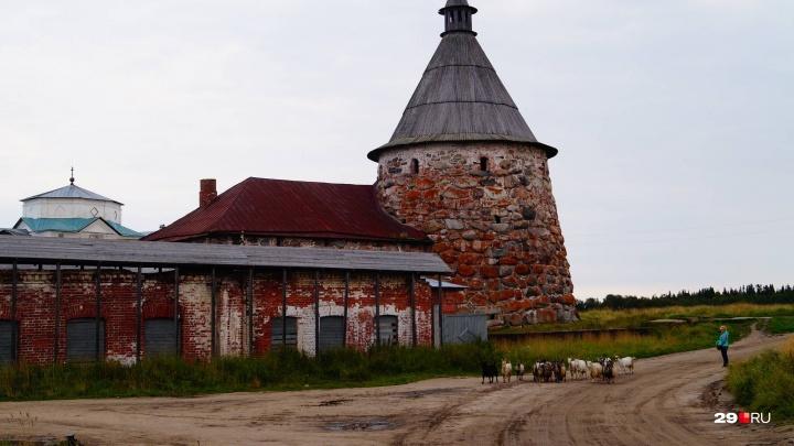 Эхо Нёноксы, билеты на Соловки и запреты: какие потрясения испытал турбизнес в Поморье этим летом