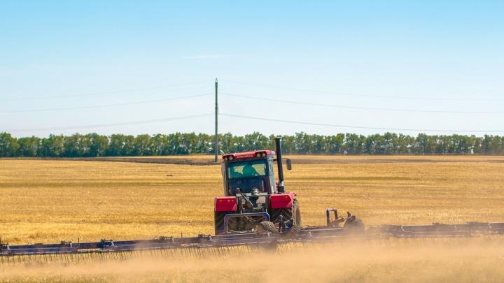 Новый IT-проект свяжет производителей и поставщиков сельзохпродукции в Самарской области