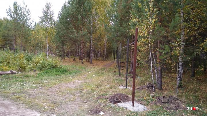 «Райского места больше нет»: в челябинском микрорайоне спилили 300 деревьев и начали стройку
