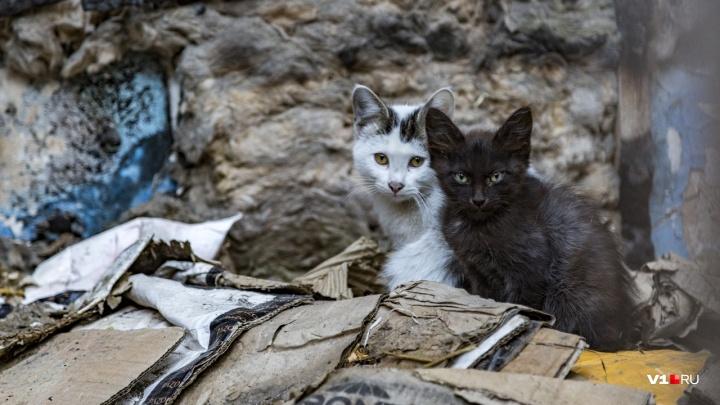 Под Волгоградом ВАЗ-2110 улетел в кювет и врезался в столб, объезжая чёрную кошку: одна пострадавшая