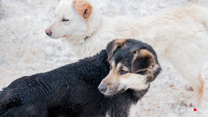 Как выгуливать собак и парковать авто: в Самаре изменят правила благоустройства