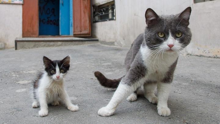 «Из укрытия их выгоняет голод»: волгоградцы пытаются спасти из «нехорошего» дома запуганных кошек