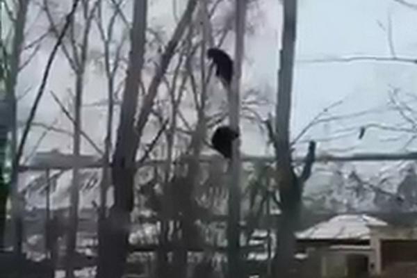 Два медведя забрели в Красноярск и устроили шоу для жителей Свердловской