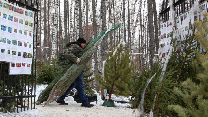 Инструкция UFA1.RU: рассказываем, куда сдать елку в переработку