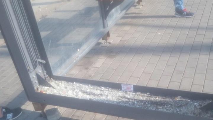 На вандалов нет управы: стеклянные остановки на Московском шоссе решили заменить