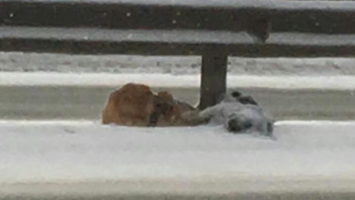 Под Уфой сняли на видео Хатико: пес не отходил от погибшего на трассе друга
