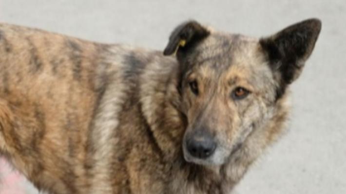 «Это акт вандализма»: пермяки возмутились выгулом собак на Южном кладбище