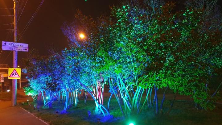 Ещё одну зеленую зону у Свободного оснастили подсветкой