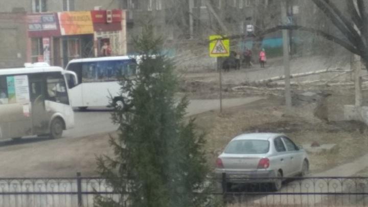 На Завертяева упавшее дерево перегородило дорогу