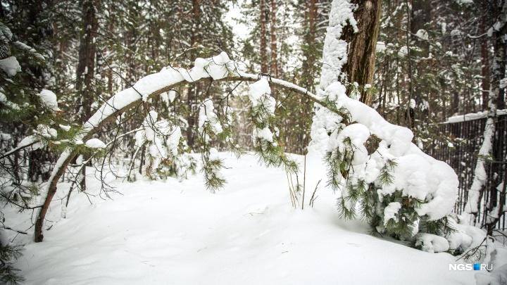 Заблудившегося под Новосибирском мужчину отыскали в лесу спустя 8 часов: помогло СМС