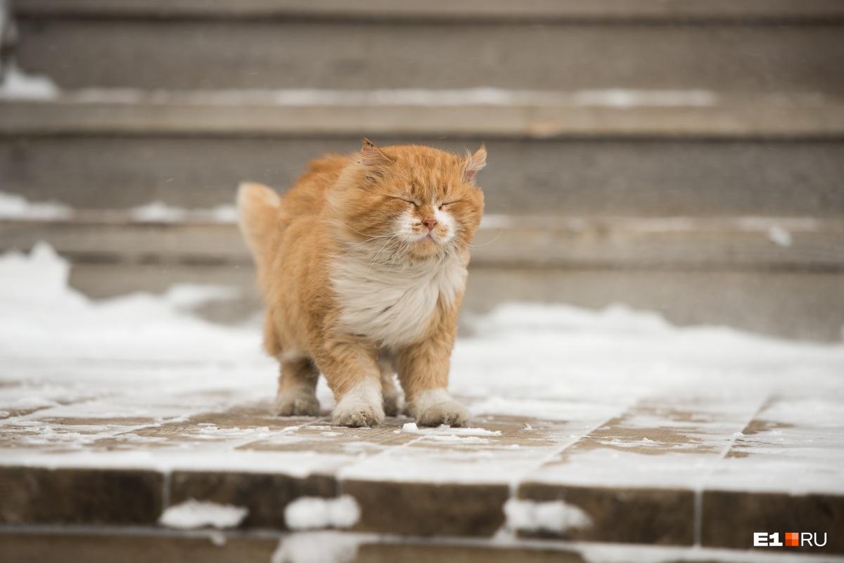 Знакомитесь: великолепный хозяйский кот