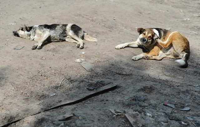 Жителя села в Зауралье будут судить за жестокое избиение собаки