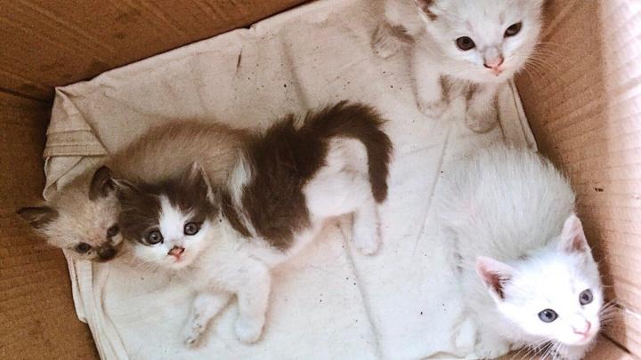 Нравы Волгограда: в борьбе за безделье УК замуровала котят в подвале