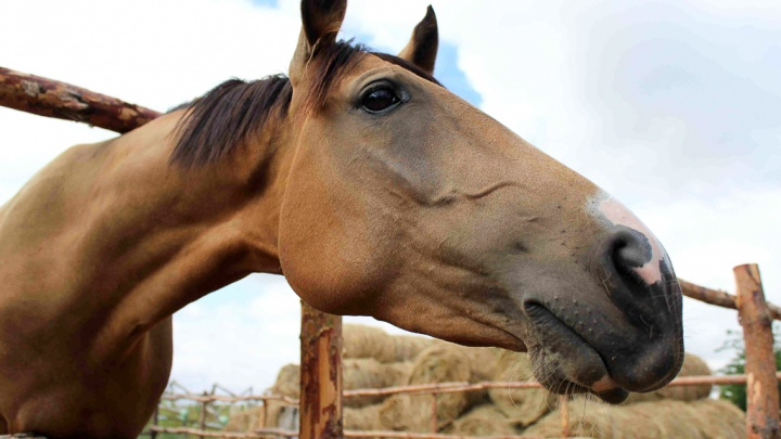 На трассе в Волгоградской области под колесами иномарки оказались две лошади