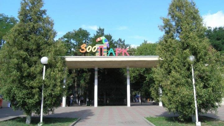 Депутат рассказал о нелегальных парковщиках у ростовского зоопарка
