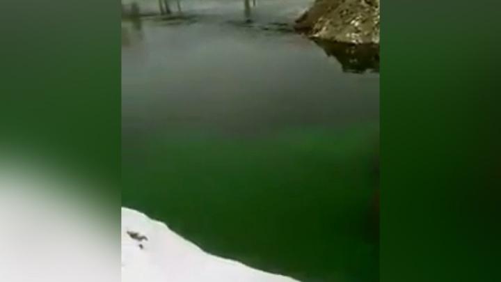 «Это большая проблема»: река Миасс возле стройки конгресс-холла окрасилась в кислотно-зелёный цвет