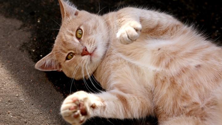 Сегодня их день! Правила жизни ярославских котов