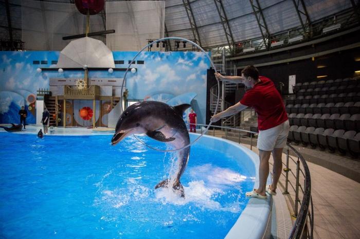 Среди новых элементов, которые на тренировке демонстрировали дельфины, был прыжок через кольцо