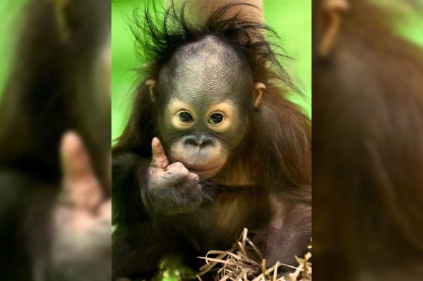 На днях в Московсковском зоопарке сделали это фото Матику
