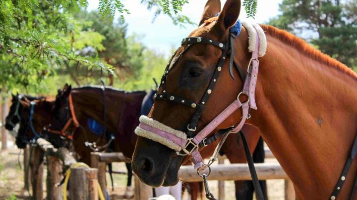 «Лошади от голода съели весь газон»: команду волгоградских джигитовщиков оставили без жилья и денег