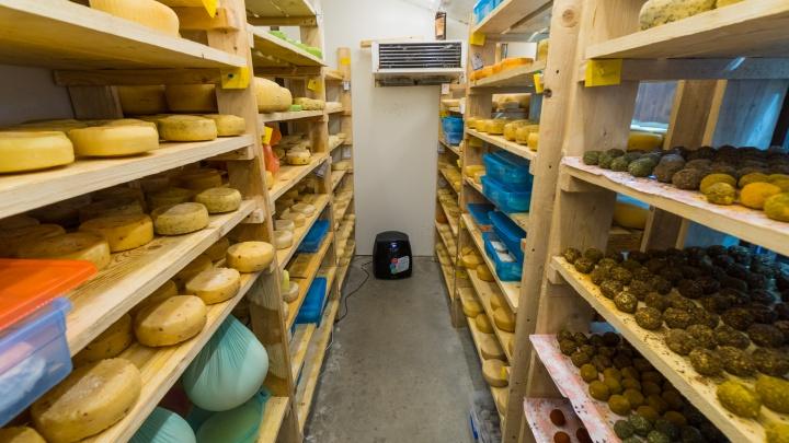 «Друзья всегда наш сыр хвалили». Как пермяк превратил хобби в работу и открыл сыроварню