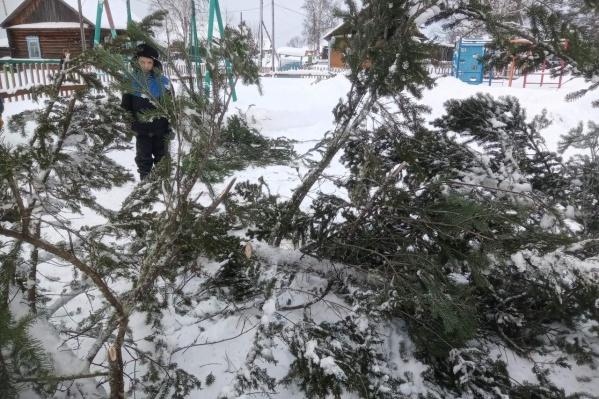 Вот что осталось от новогоднего дерева