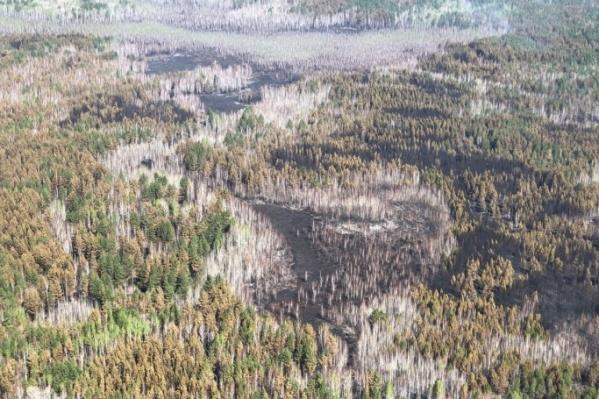 Сумма ущерба, причиненного лесным пожаром, составила более четырех миллионов рублей