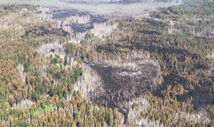 Курганцу, по чьей вине в мае сгорело 20,6 гектара леса, вынесли приговор