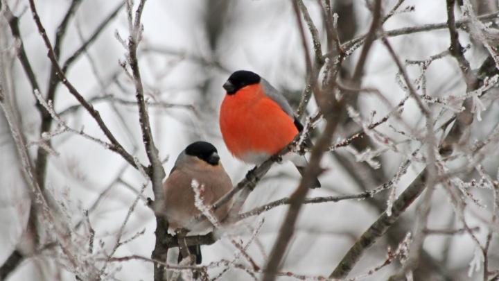 Чтобы спасти птах: активисты из Уфы потребовали у энергетиков изолировать опасные провода
