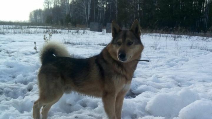 «Застрелили любимую собаку сына». Жители Заводоуковска требуют наказать убийцу лайки