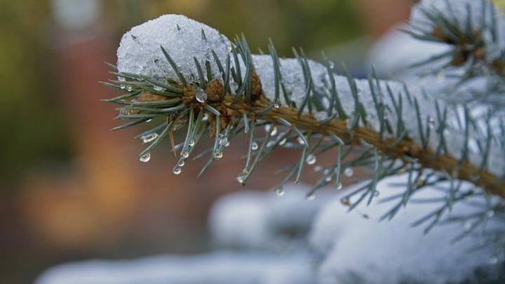 Оттепель перед Крещением? В Челябинске в выходные потеплеет до -1 °C