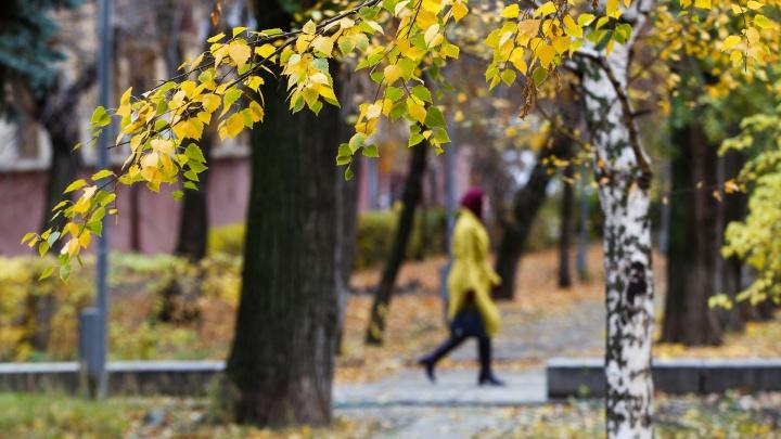 Волгоградцам обещают тёплую погоду во второй декаде октября