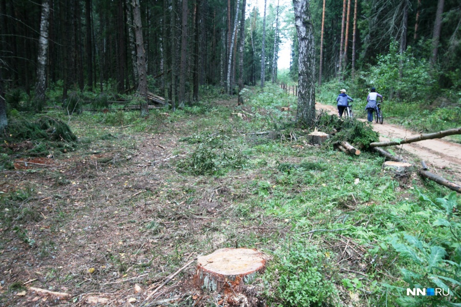 Парк «Швейцария» вНижнем Новгороде обработают против клещей