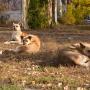 Без яда: в Самаре отловят 2840 бездомных собак