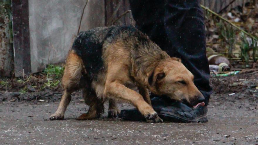 Отрабатывал на животном удары. Полиция проверяет видео с подростком, пинающим собаку