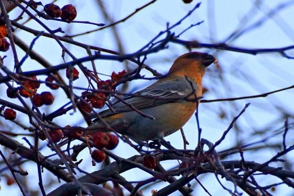 Птицы не встречаются в Перовском лесничестве