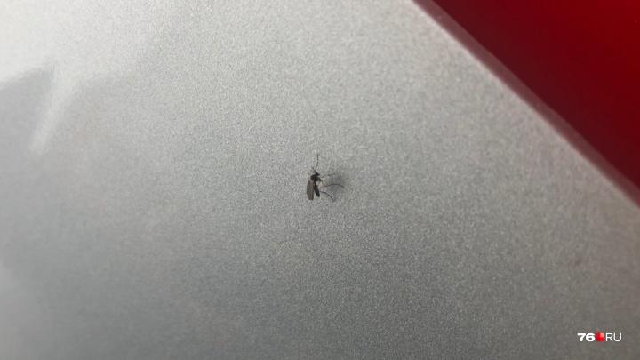Из-за аномальной погоды в Ярославле проснулись комары