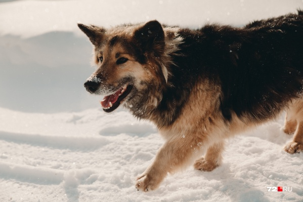 В администрации района объяснили, что даже после отлова бездомных собак их все равно потом вернут на прежнее место обитания