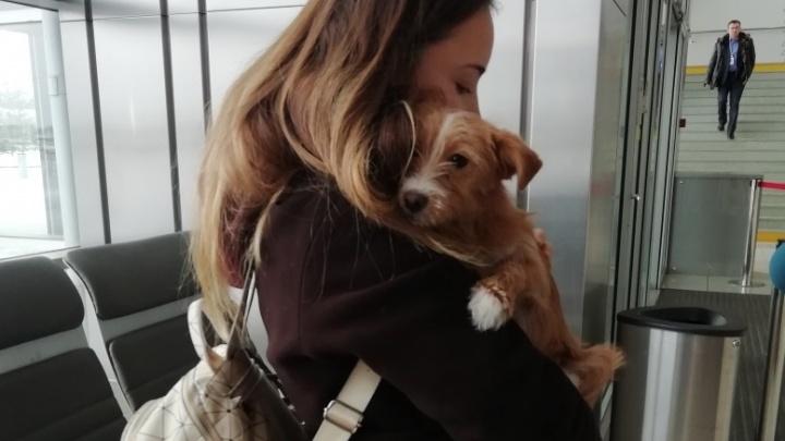 Студентка в Китае спасла щенка, которого хотели съесть, и вернулась с ним в Екатеринбург